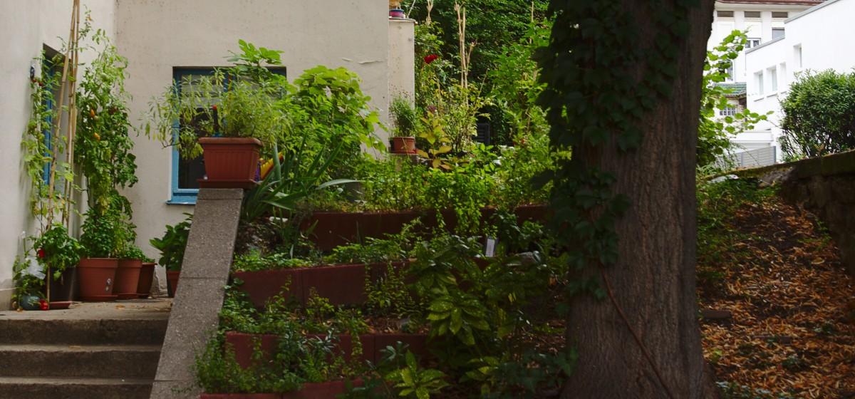 Der StuRa-Garten
